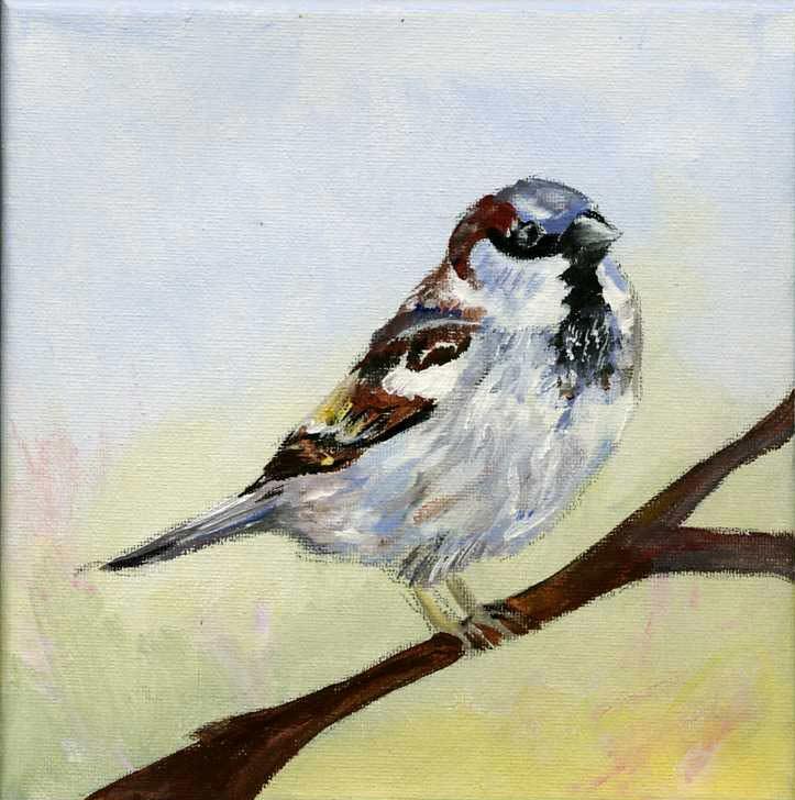 Näyttelytöitä: linnut (VV #8)